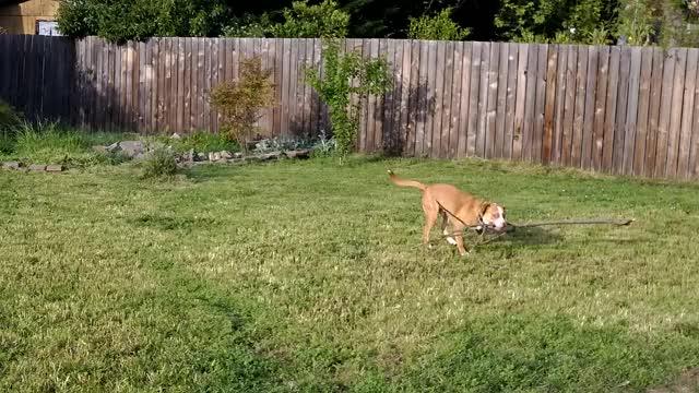Watch and share Troll Dog GIFs on Gfycat