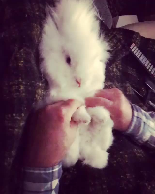 Watch and share Snugglez The Bunny GIFs and Petoftheday GIFs on Gfycat
