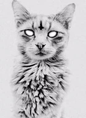 Watch and share 666 Cat GIFs by Noobinho on Gfycat