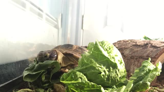 Watch Turtle GIF on Gfycat. Discover more turtle GIFs on Gfycat