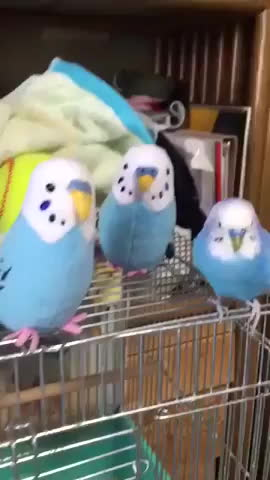 epic, video, viral, Parakeet plays with toys that look like him GIFs