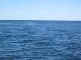 Watch and share Breaching Whale GIFs and Humpback Whale GIFs on Gfycat