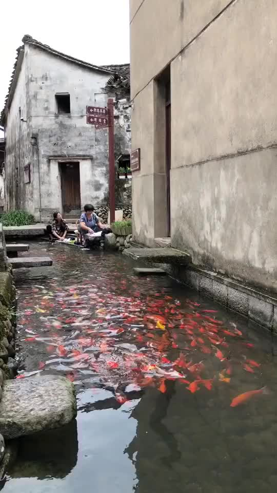 Watch koi fish GIF on Gfycat. Discover more related GIFs on Gfycat