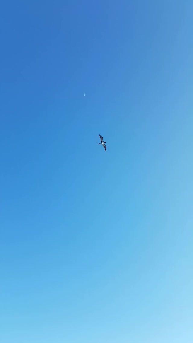 Watch Bird chasing a boat for fish GIF on Gfycat. Discover more NatureIsFuckingLit, natureisfuckinglit GIFs on Gfycat