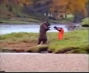 """Watch and share John West Salmon """"Bear Fight"""" Ad GIFs on Gfycat"""