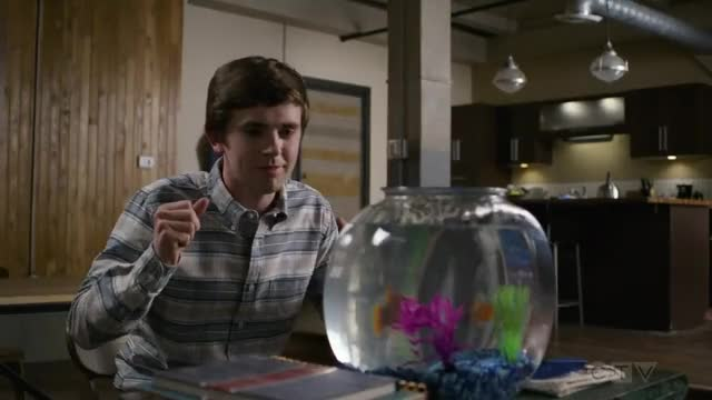 Watch The Good Doctor 2x09 GIF on Gfycat. Discover more celebs, freddie highmore GIFs on Gfycat