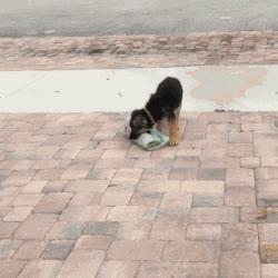 awww, cute, fetch, newspaper, puppy, Paper Puppy GIFs