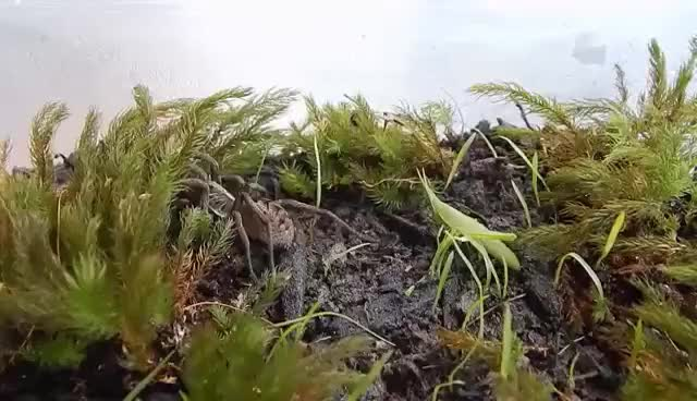 Watch and share Wolf Spider Hunting Grasshopper GIFs on Gfycat