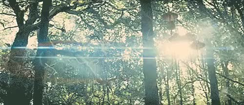 Watch and share Mystic Light GIFs and Hug Trees GIFs on Gfycat