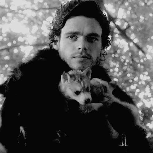 Watch this direwolf GIF on Gfycat. Discover more direwolf, game of thrones, richard madden, wolf GIFs on Gfycat