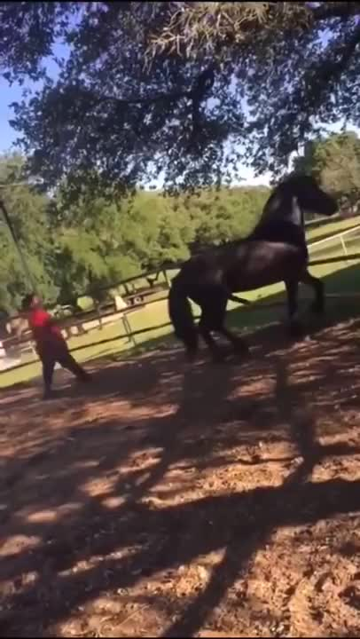 Watch and share Mare Horse Kills A Stallion GIFs on Gfycat
