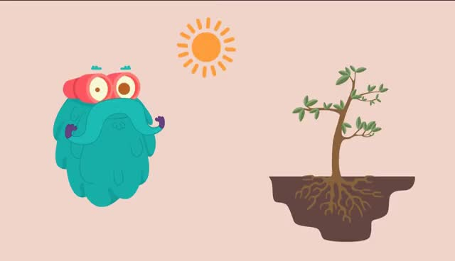 Watch and share Photosynthesis   The Dr. Binocs Show   Learn Videos For Kids GIFs on Gfycat