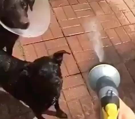 Watch this drinking GIF by GIF Queen (@ioanna) on Gfycat. Discover more cold, crazy, dog, drink, epic, excited, fresh, funny, heat, hilarious, hot, hydrate, jump, lol, pet, puppy, shower, summer, thirsty, water GIFs on Gfycat