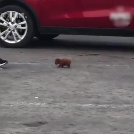 Watch and share Doggo Or Tiny Little Buffalo GIFs on Gfycat