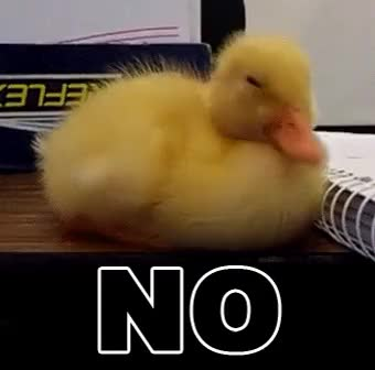 Watch this duck GIF by @surftaco on Gfycat. Discover more dota2, duck, gfycatdepot, no, postmates GIFs on Gfycat