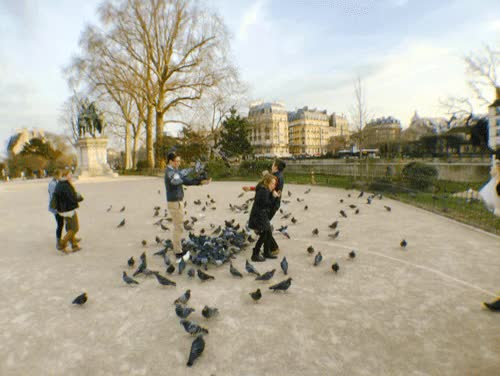 Watch and share Pigeons GIFs by ctrexpope on Gfycat