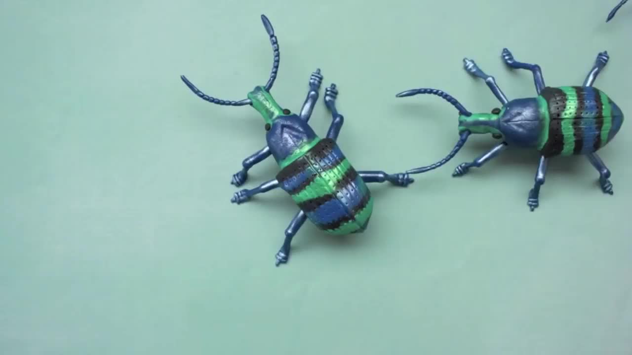 bug GIFs