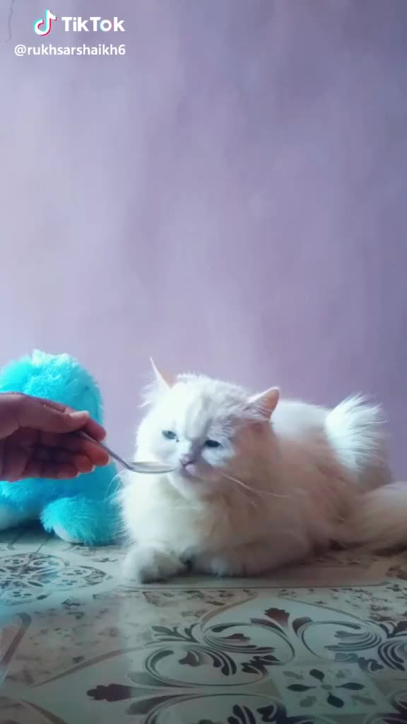 Doraemon, cat, cutecat, mom,  #Doraemon ki #mom 😂😂😂😂😂😂😍😍😍😍😘😘😘 #cutecat #cat #daisy #lovlycat GIFs