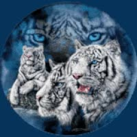 Watch and share Tigers Eyes GIFs on Gfycat
