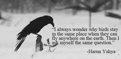 Watch and share Cool-gif-bird-flying-crow-quote GIFs on Gfycat