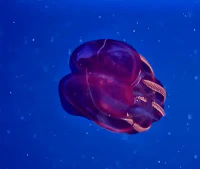 Watch and share 海洋生物 GIFs on Gfycat