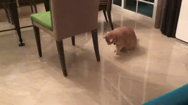 Watch and share /r/CatsBeingCats - From Sunnymeows GIFs by cakejerry on Gfycat