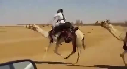 Watch and share Camel GIFs by saleh on Gfycat