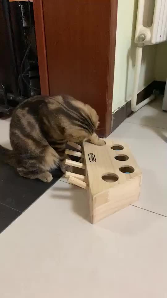 Watch and share Funny GIFs and Cat GIFs by RespectMyAuthoriteh on Gfycat