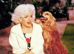 Watch Ozan GIF on Gfycat. Discover more dog, gülümseme, köpek, marilyn monroe, monroe, smile GIFs on Gfycat