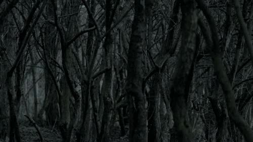 Watch and share Dark GIFs on Gfycat