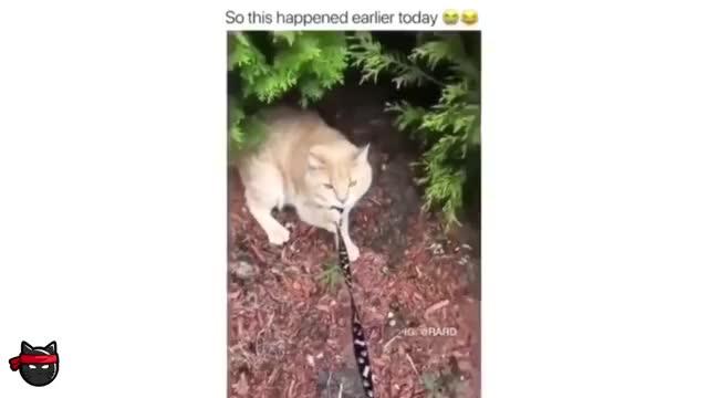 Watch BEST DANK CAT MEMES COMPILATION GIF on Gfycat. Discover more animals, best cat memes, cat, cat meme compilation, cat memes, cat memes compilation, cats meme, cute, dank cat memes, dank cats, dankest cat memes, funny, funny animal videos, funny animals, funny cat memes, funny cat videos, funny cats, meme compilation, pet memes, pet ninja GIFs on Gfycat
