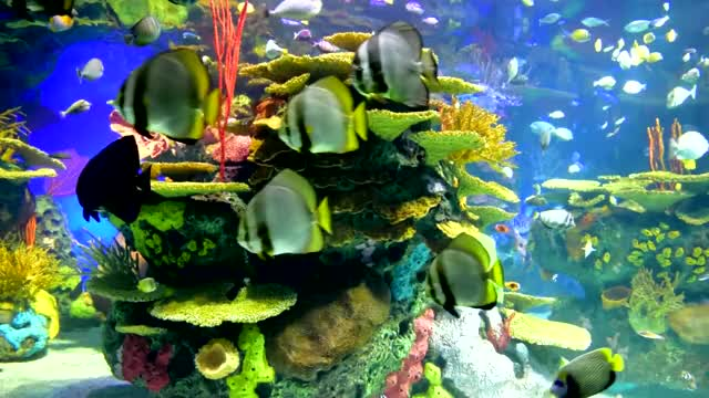 Watch and share Relaxing Aquarium GIFs and Stunning Aquarium GIFs on Gfycat