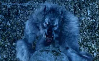 Watch werewolf GIF on Gfycat. Discover more related GIFs on Gfycat