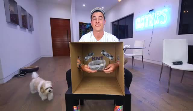 WHAT'S IN THE BOX CHALLENGE (HUGE FREAKOUT) GIFs