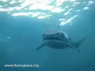 Watch and share Sharky GIFs on Gfycat
