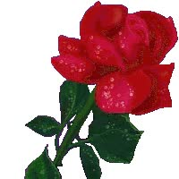 Watch and share Rosa Roja animated stickers on Gfycat