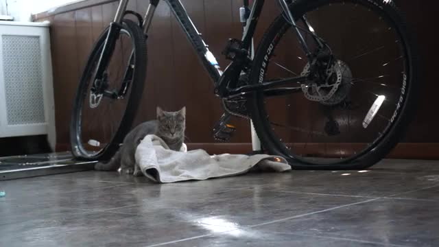 Watch and share Django And Towel (reddit) GIFs on Gfycat