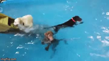 Watch and share Dog Swimming GIFs on Gfycat