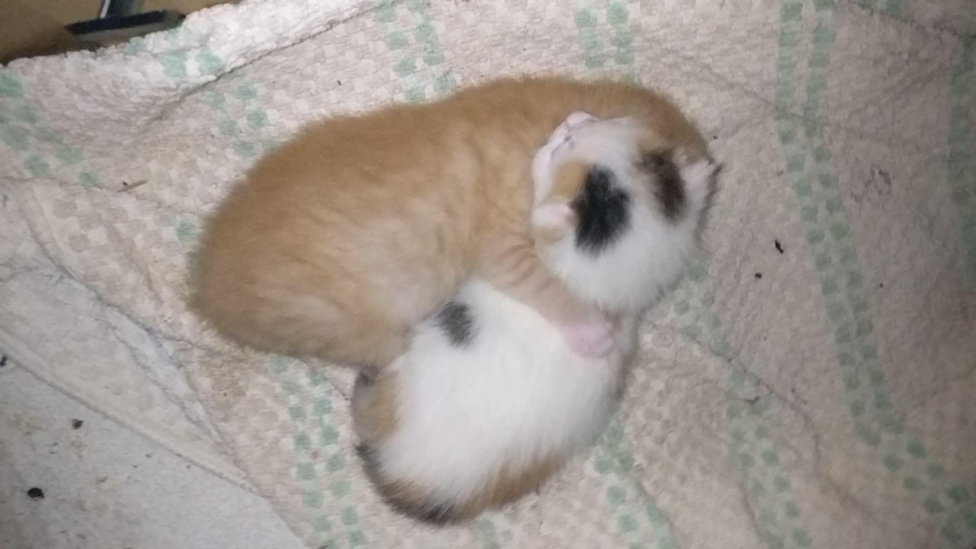 Cats, Kittens GIFs
