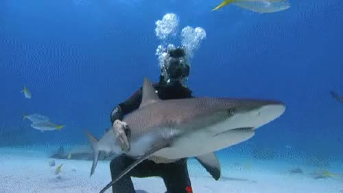 Watch and share Rob Stewart GIFs and Sharkwater GIFs on Gfycat
