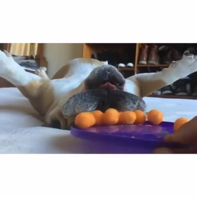 Watch and share Hungry Hungry Bulldog GIFs by HoodieDog on Gfycat