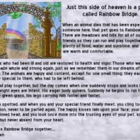 Watch Rainbow Bridge GIF on Gfycat. Discover more related GIFs on Gfycat
