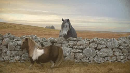 Watch and share Funny Horse Gif 830 GIFs on Gfycat