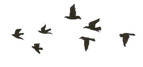 Watch and share Bird, Birds, Pretty animated stickers on Gfycat