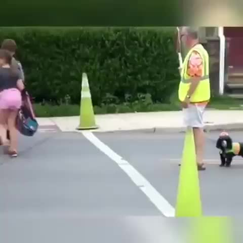Watch and share Cross Walk  GIFs by LimeLights  on Gfycat