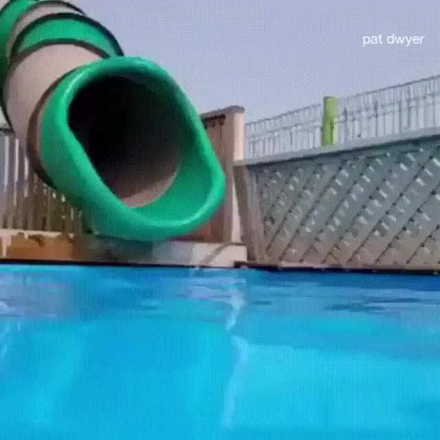 Watch and share Corgi GIFs and Pool GIFs on Gfycat