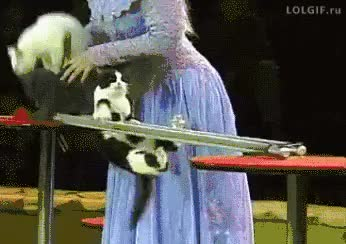 Watch and share Cat Athlete. GIFs by n0importa on Gfycat