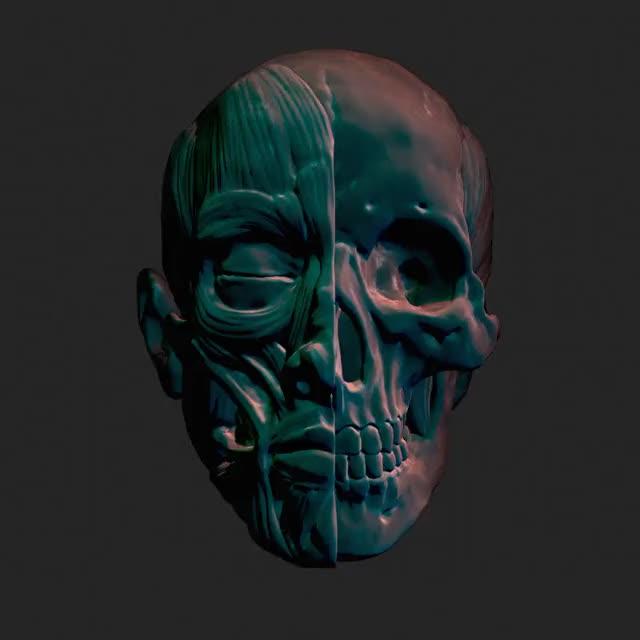 Rotating Skull' look dev test I rendered the other day (reddit) GIF