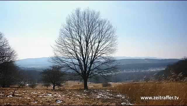 Watch and share Zeitraffer Jahrszeiten Maerchen Baum Vier Jahreszeiten Trim GIFs on Gfycat