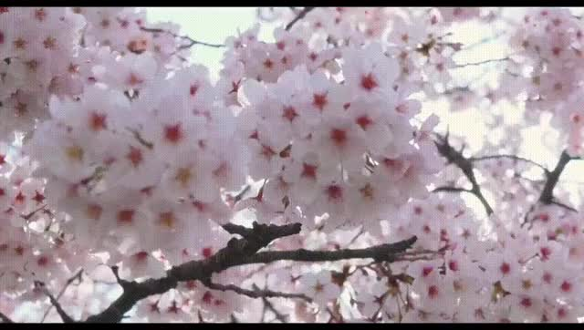 Watch Shigatsu wa kimi no uso (Live Action) Music Video (online-video-cutter.com)_2 (1) GIF on Gfycat. Discover more related GIFs on Gfycat